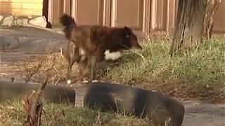 В Чугуеве отказались от услуг КП «Центр обращения с животными»