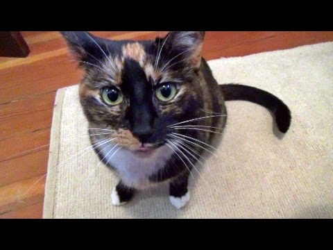 Cupcake The Cat Flops & Purrs