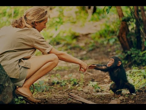 Documentary gives new glimpse at Jane Goodall's early research