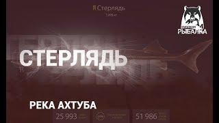 RF4 РР4 Русская Рыбалка 4 Река Ахтуба Стерлядь и Осетр