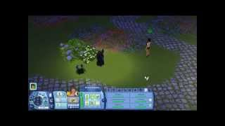 Sims Freeplay Money Cheat (Swimming Pool Update)