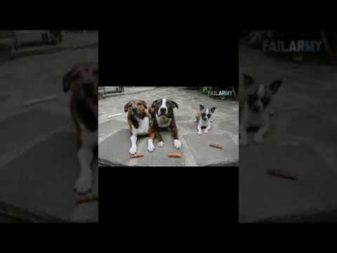 The Ultimate Funny Animal Compilation volume 3