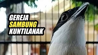 Download lagu MASTERAN CENDET ISIAN GEREJA SAMBUNG KUNTILANAK