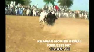 bull race mela dhulmi shareef gujar khan 2012