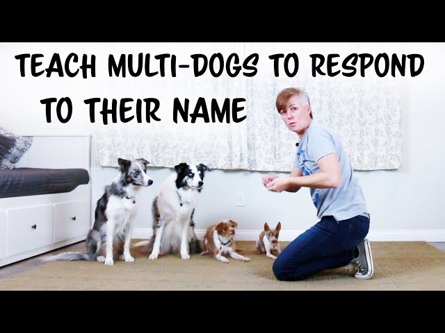 Teach your dog to respond to his name - Multi-Dog Dog Training