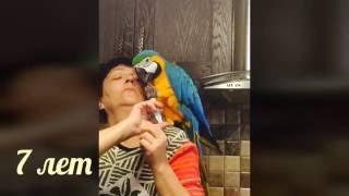Купить попугая ара Москва