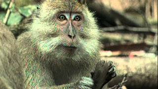 La vie privée des animaux de Patrick Bouchitey - Episode 16