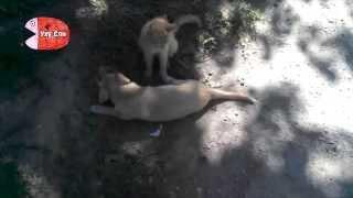 Кот и пес дурачатся)
