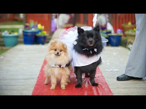 Cute Doggy Wedding