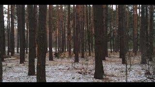 Коп по Киевской области. Фильм 44 (холодный, лесной коп).