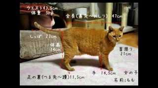 猫の身体測定画像をまとめた動画です。 ブログ「熟女猫の毛深い手の上で...