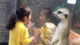 실내 동물원에는 신기한 동물들이 너무 많아요!! 서은이의 아이엔주 동물들과 놀기 관람하기 뱀 물고기 도마뱀 미어켓 여우 Zoo and Indoor Playground