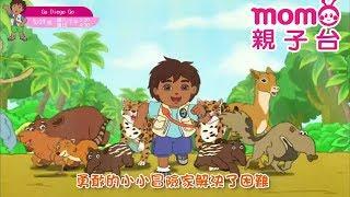 momo親子台|【GO DIEGO GO!】片頭曲~每週六 下午5:30