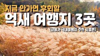 국내 가을 억새 여행지 3곳 서울 근교 경기도편 시흥 …