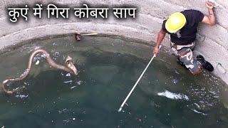 फिर एक बार खतरनाक कोबरा रेस्क्यू ऑपरेशन, वीडियो जरूर देखिये Rescue cobra snake from Ahmednagar