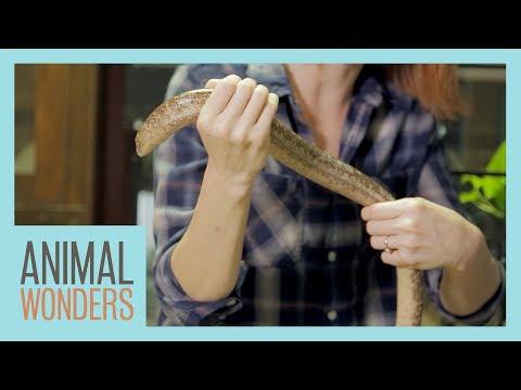 Holding A Legless Lizard