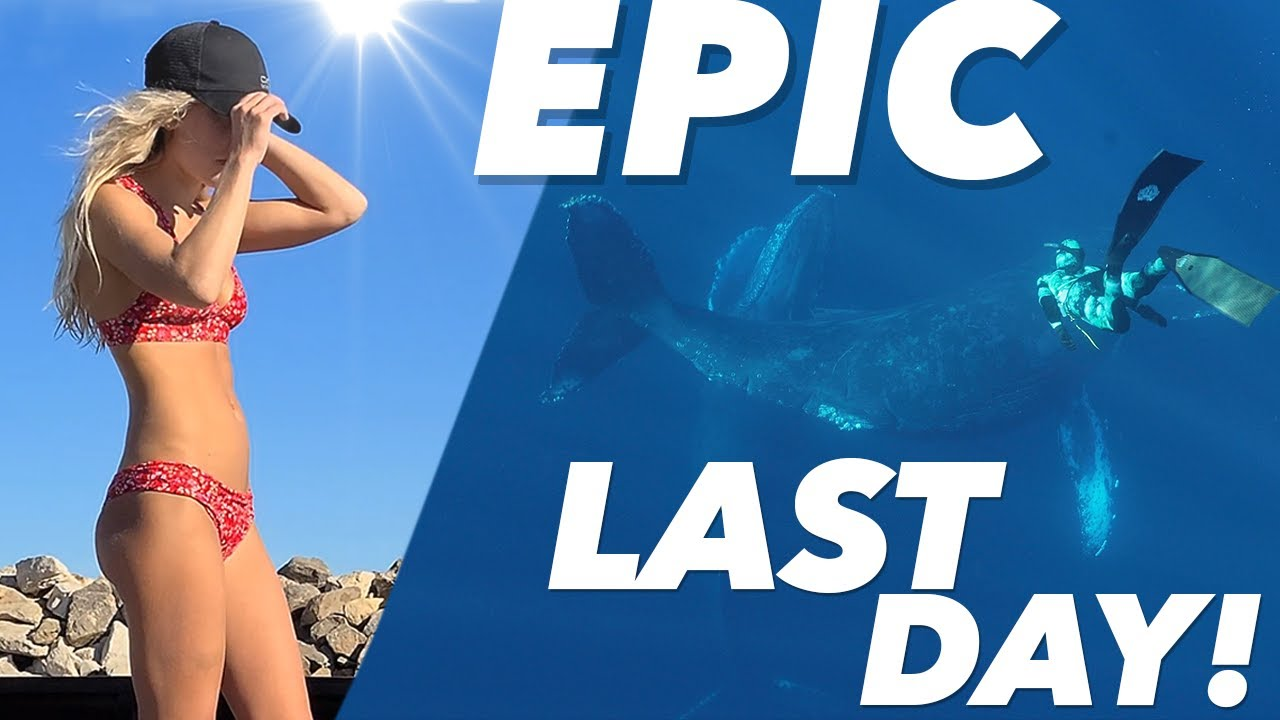 [Pt 6/6] Cabo! I LOST MY DRONE to the Ocean & WE SWIM WITH WHALES