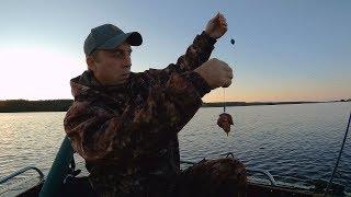 Ловля сома на куриную печень. Отчёт о рыбалке