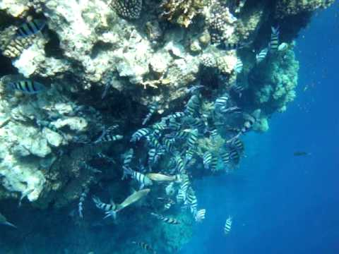 pinky, wall, sharm, el, sheikh, egipt, egypt, egypten, scuba, diving, nurkowanie, podwodny, underwater, tauchen, unterwasser, more, czerwone, red, sea, rote, meer, synaj, sinai, pó�wysep, nature