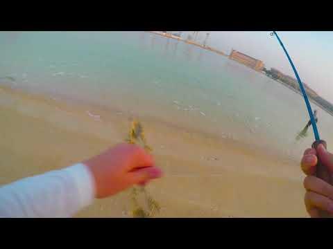 Amazing Milkfish Take On The Fly - Dubai, UAE