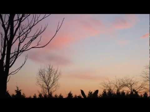 teaser Forest Field - Phoenix For The Sunrise