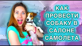 Собака в салоне самолета. Как провести собаку в самолете? Elli Di.(, 2015-04-10T12:00:00.000Z)