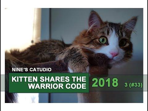 Norwegian Forest Cat Kitten Breed Warrior Code (Nine Rules). 2018
