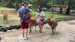 Japan Trip Day 7: Nara