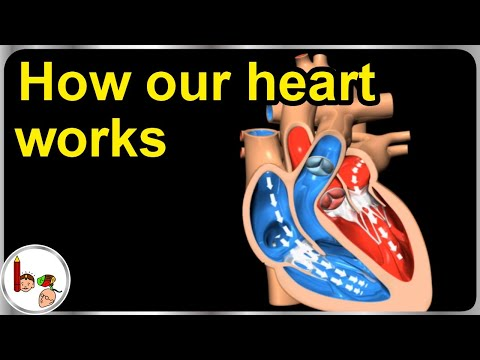 How our heart works – Structure and function (3D animation) - In ...