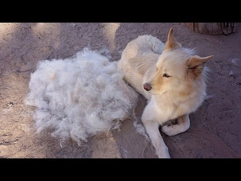 FURminator - Product Review