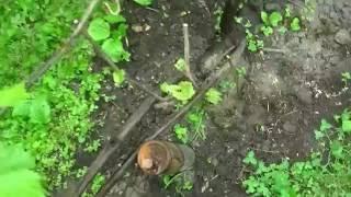 Размножение винограда для лентяев.