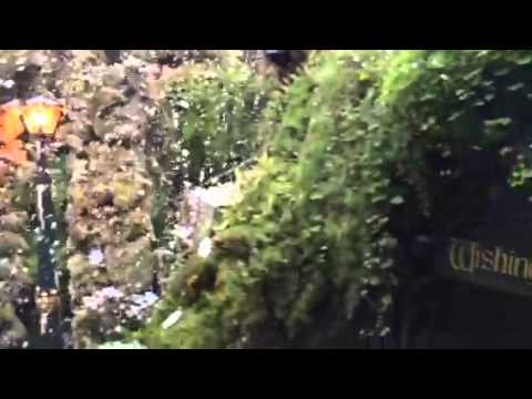 how to make a fernery