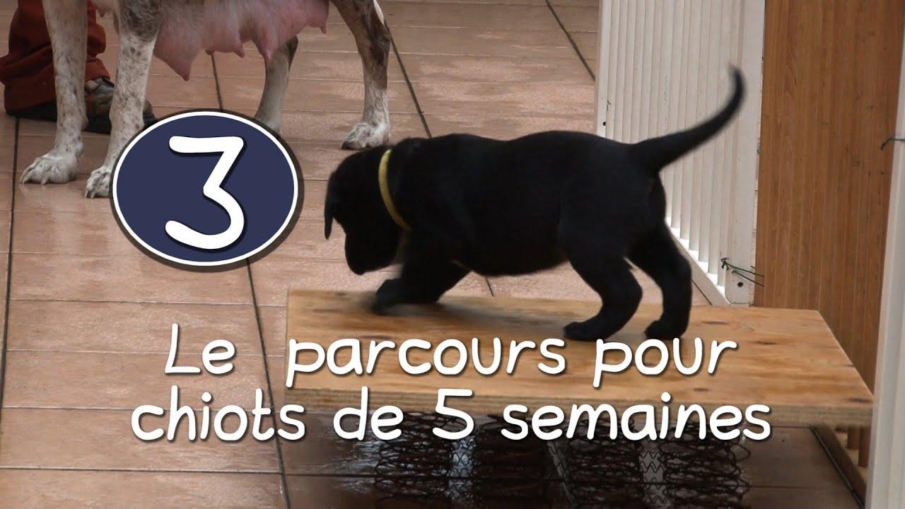 Dans la peau d 39 un chien guide 3 le parcours pour - Couper les griffes d un chiot ...