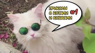 ПРИКОЛЫ С КОТАМИ - СМЕШНЫЕ КОТЫ И КОШКИ 2018 #1 | РЖАКА ДО СЛЕЗ