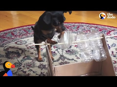 GENIUS Dog Solves 10 Hard Puzzles | The Dodo