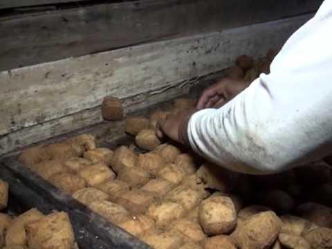 Pembuatan Tahu Sumedang, tahu khas oleh-oleh khas Sumedang gurih dan nikmat (Papitakidsnews)