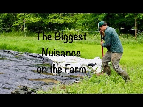 The Biggest Nuisance on the Farm