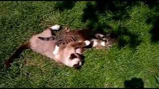 забавные коты, или деревенские приключения Мотроскина и Огнежки