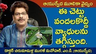 వందలకొద్దీ వ్యాధులను తగ్గించే జామ. Amazing Remedies with Guava Fruit and Tree in Telugu.