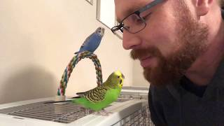 Teaching the parakeets to talk