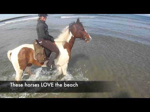 Trip to Ireland - fabulous horsbackriding - Sligo Grange