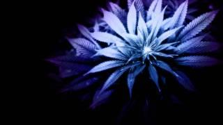 Krusseldorf - Devil Weed