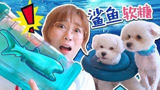 夏日清爽鯊魚軟糖冰飲DIY!內含夏天和狗狗的暖心日常!小伶玩具   Xiaoling toys