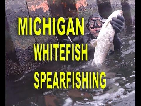 Michigan Whitefish Spearfishing 2016