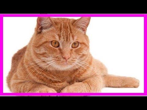 Common cat names, naming cats, popular, unique, unisex