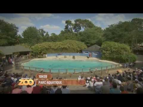 Une Saison Au Zoo - Singes, otaries et tigre blanc (S4 Ep01)