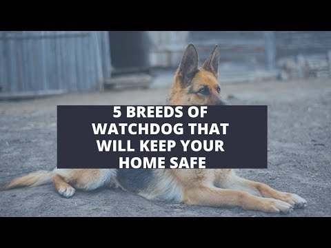 5 Breeds Of Watchdog That Will Keep Your Home Safe