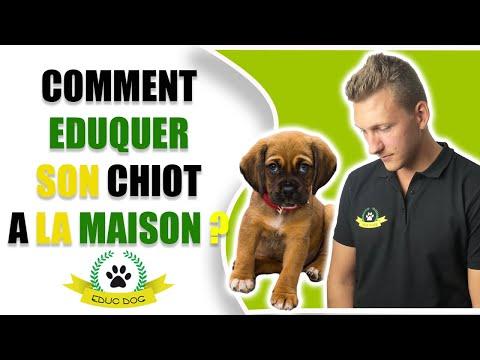 Comment Éduquer Un Chiot - 10 techniques à savoir - Éducateur canin