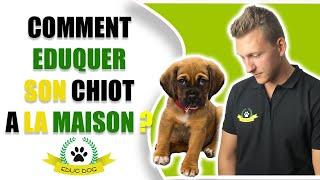 LES RÈGLES DU CHIOT A LA MAISON !!!!!! #96/100