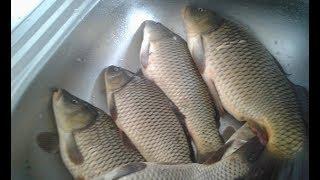Рыбалка на КАРПА  по Холодной Воде ( 9 марта 2018 )